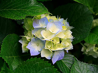 A picture of a pretty blue and yellow flower